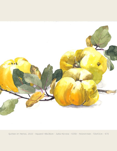 Aquarell, Quitten mit Zweig, Illustration, Watercolour, Quinces with Twig and leaves