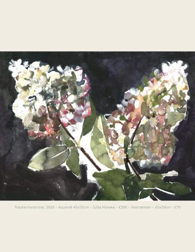 Aquarell, Traubenhortensie, Hortensienblüte,
