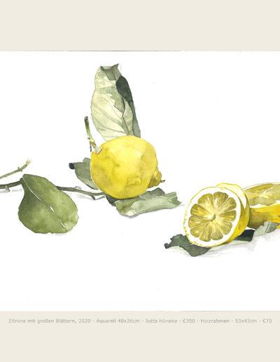 Aquarell, Zitronen mit großen Blättern, Illustration, Watercolour, Lemons